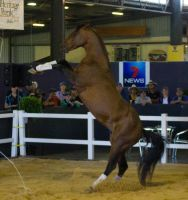 STOCK - 2014 Total Equine Expo-14 by fillyrox