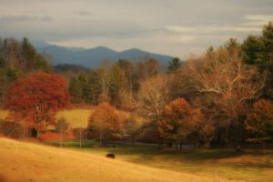 Pasture at Biltmore by ncphotojunkie