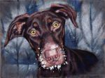 Dog Playing in Snow by J-A-N-I-N-E