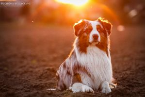 Charlie in sunshine by KristynaKvapilova