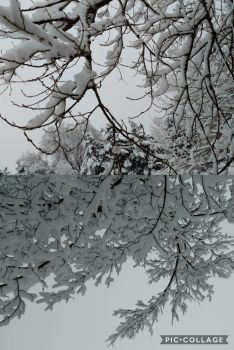 Snow Covered Branches by xIcyRainx