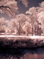 Creek side infrared by Pennes-from-Heaven
