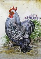 Rooster Looking for Love by HouseofChabrier
