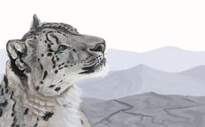 Snow Leopard Gaze by BlackjackConcpiracy