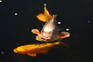 Hungry, hungry fish by MarieLoup