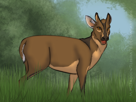 M is for Muntjac by Tephra76