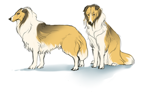 Collie Bro by DoctorCritical