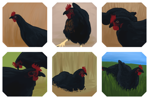 Assorted Chickens by Shade-os