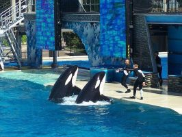 Killer Whales by PainedRose