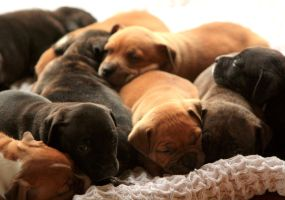 Puppy pile by cathy001