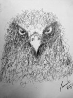 Eagle - pencil doodle by srimant