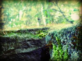 Moss Covered Stones #2 by AndehDulac
