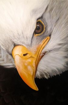 Bold Eagle, head. Acrylics on canvas. by Li-Soro