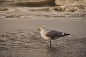 Seagull by Neurologics