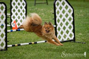 Mocha Jumping by ShelleyVPhoto