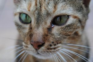 close up. kitty . by AngelicPicture