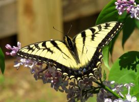 Yellow Beauty by JMcCarty09