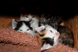 5 19 09 Kittens by DeviantLadyAshley