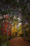 Minnesota Fall by Pengibuddy