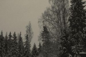 Trees and snow by King-Madness