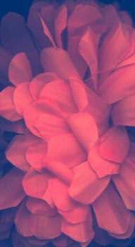 Texture flower 2 by palnk