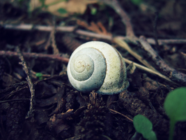 Day 139 - Escargot by Tumbling-Star