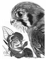 Falcon and Flower by WaveGlistening