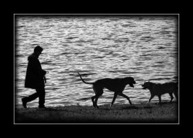 One man and his dogs ... by shelleyzeus