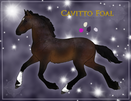 Cavitto Foal 1107 by SLEC-EqIsMyLife