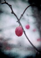 Lonely Winterberry by MagpieMagic