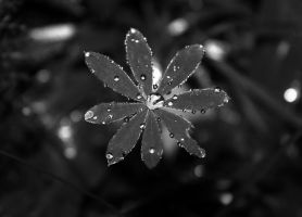 After the rain. by victoriaz