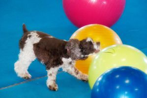 Treibball III by LDFranklin