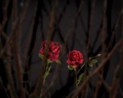ROSE_DARK_BACKGROUND by TheArtist100