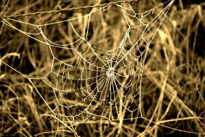 Spiderweb 3 by bluesgrass