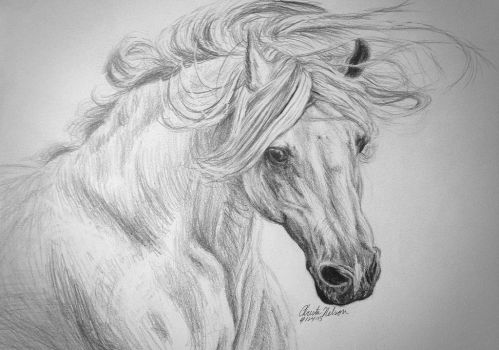 white horse sketch by Christa-S-Nelson