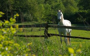 White Horse 2560x1600 by hermik