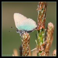 Butterfly 5 by Globaludodesign
