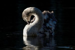Preening by FurLined