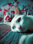 waiting for my cat prince by hawflakes