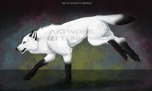 Trade: White Spirit Wolf by sugarpoultry