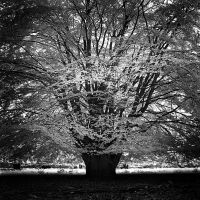 B+W Tree - infrared by MichiLauke
