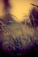 After Rain 3 by Eredel
