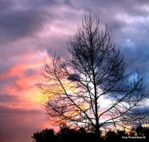 Tree Scape 2 by Toneproductions1