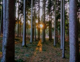 sunset in the forest by Mittelfranke