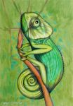 green chameleon by federicocortese