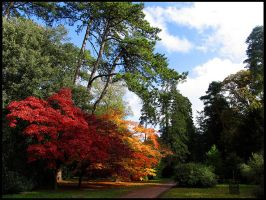 Westonbirt Autumn by parallel-pam