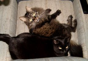 Cats on my chair by Ripplin