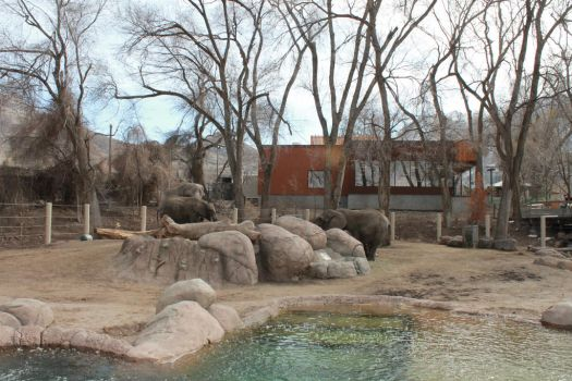 Zoo Elephants by donsher8