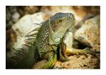 iguana 02 by airbags
