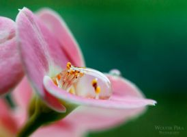 Water Drop by WouterPera